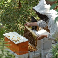 Beekeeping - Level 2