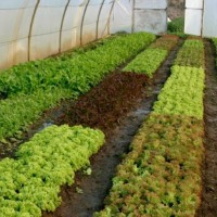 Kickstart your Micro Farming Enterprise