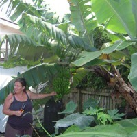 Trees and Perennial Crops - Creating Food Forests - PDC