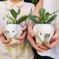 Fun Animal Planter for Kids
