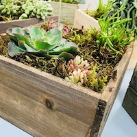 Succulent Table Arrangement
