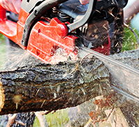Chainsaw - Operate and Maintain - AHCMOM213