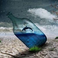 Surrealism - Still LIfe / Collage