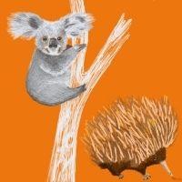 Echidnas and Koalas - 4-7yrs