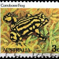 Corroboree Frog - 8+yrs