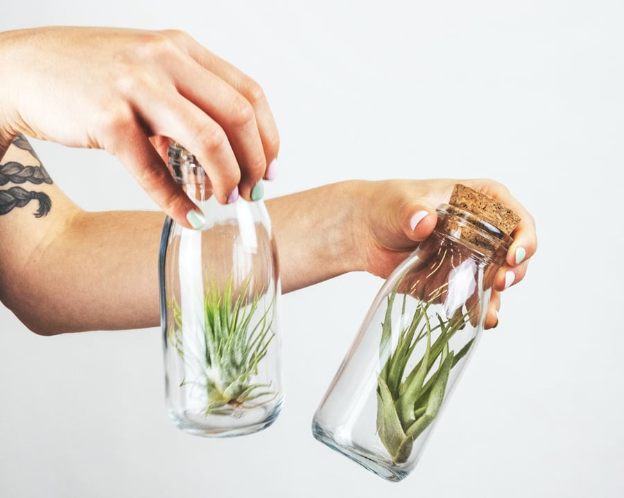 A woman holding two glasses filled with air plants.