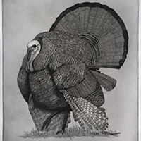 Copper Plate Etching with Angus Fisher
