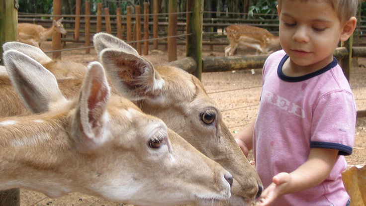 A young boy hand feeding deer at a zoo or animal park
