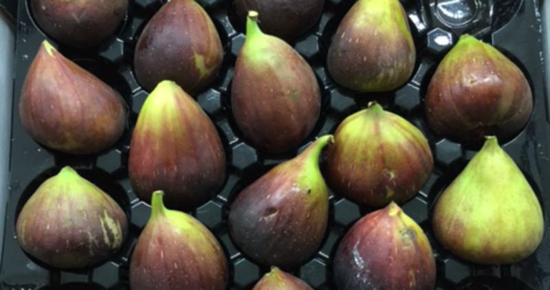 figs lane cove