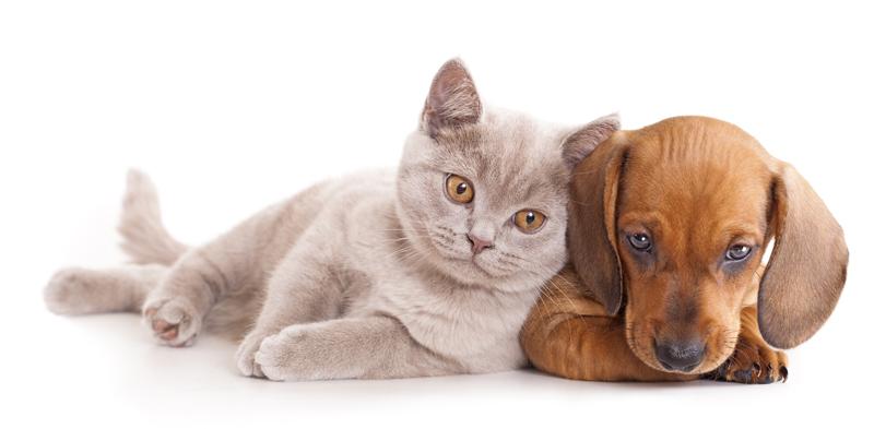 kitten puppy vet