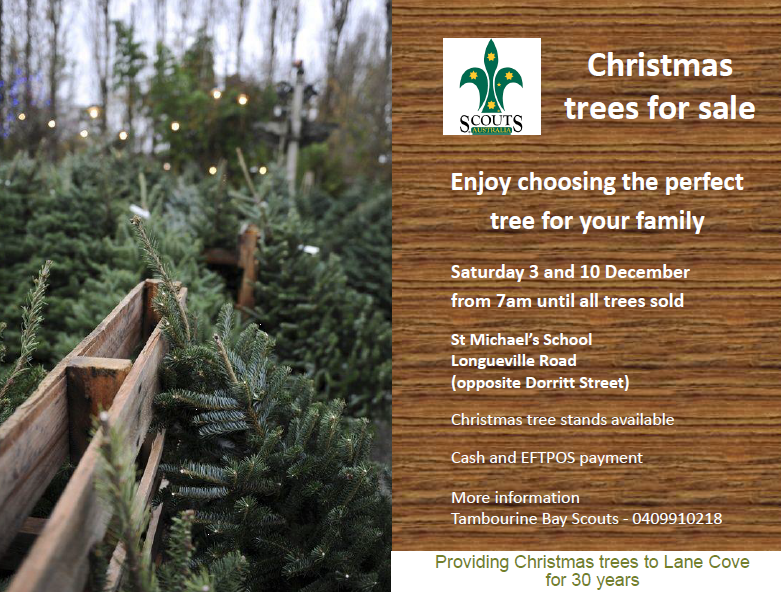 Fresh Christmas Tree.Where To Buy Fresh Christmas Trees In Lane Cove In The Cove