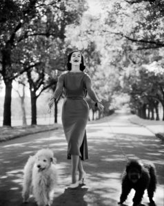 2009/43/1-5/17/14 Negative, black and white, 4x5 inch format, model Margo McKendry with two dogs, fashion by Sharene Creations, photograph by Bruno Benini, Fitzroy Gardens, Melbourne, Victoria, Australia, 1961. Edited version of scan 00239323