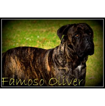 Famoso Oliver - Famoso Ovliver - avaliable for stud