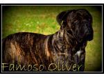 For Stud Famoso Oliver