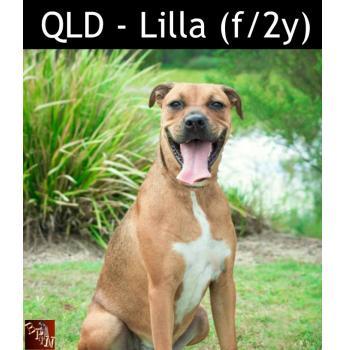 QLD - Lilla (f/2y)