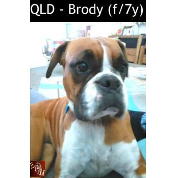 QLD - Brody (f/7y)