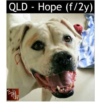 QLD - Hope (f/2y)