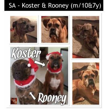 SA - Koster and Rooney (m/10&7y)