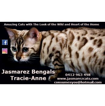 Jasmarez Bengal Kittens  - Azure Waters My Snow Queen