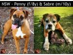 For Adoption NSW - Penny (f/8y) & Sabre (m/10y) boxers