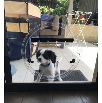 Pet Door, Dog Door, Cat Door - $50 Discount! - Cute Puppy