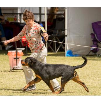 Rottweiler Puppies - Mother - Rottgems Kavala Valda - ZIP