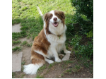Events Expressions of Interest - Border Collie Puppies
