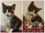 For Adoption Gracie - Female kitten