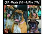 For Adoption QLD - Maggie and Diva