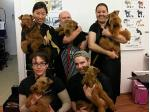 For Sale Welsh Terrier