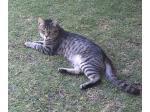 For Adoption Rescue cat