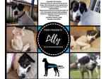For Adoption Lilly