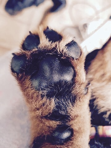 Talk to the paw! gallery image