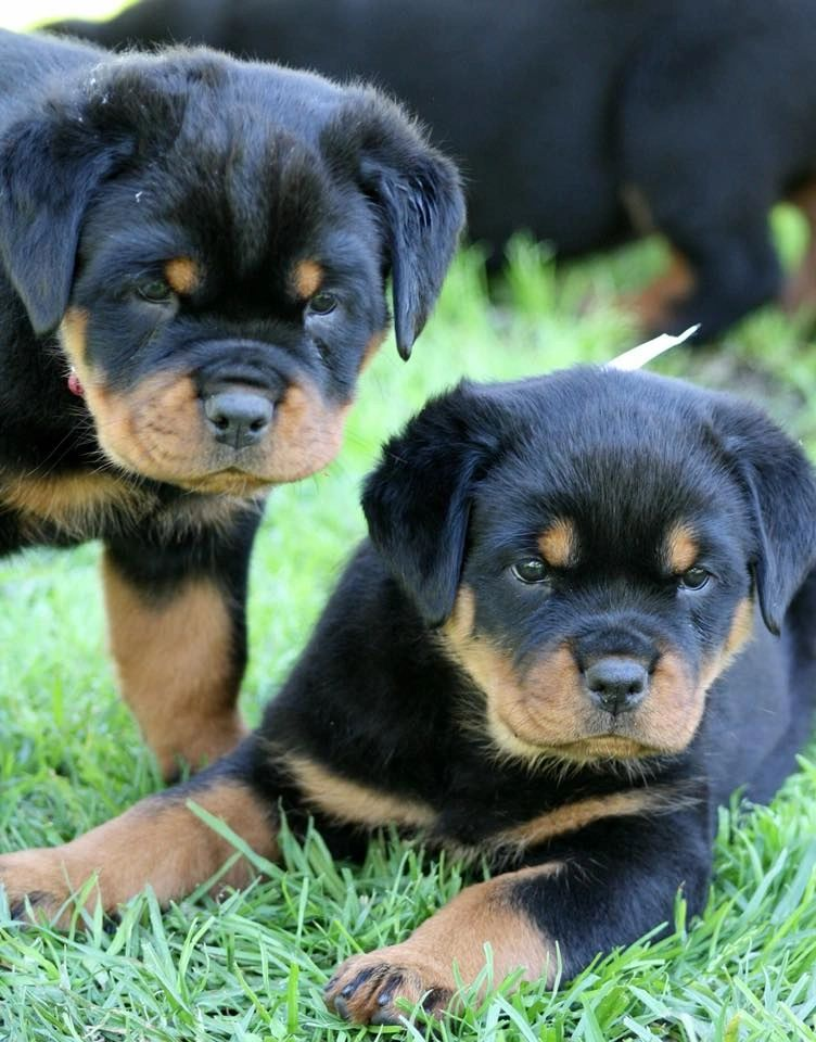 Puppies from another litter