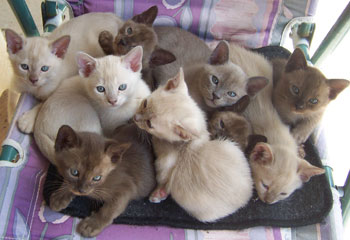 Previous Litter gallery image