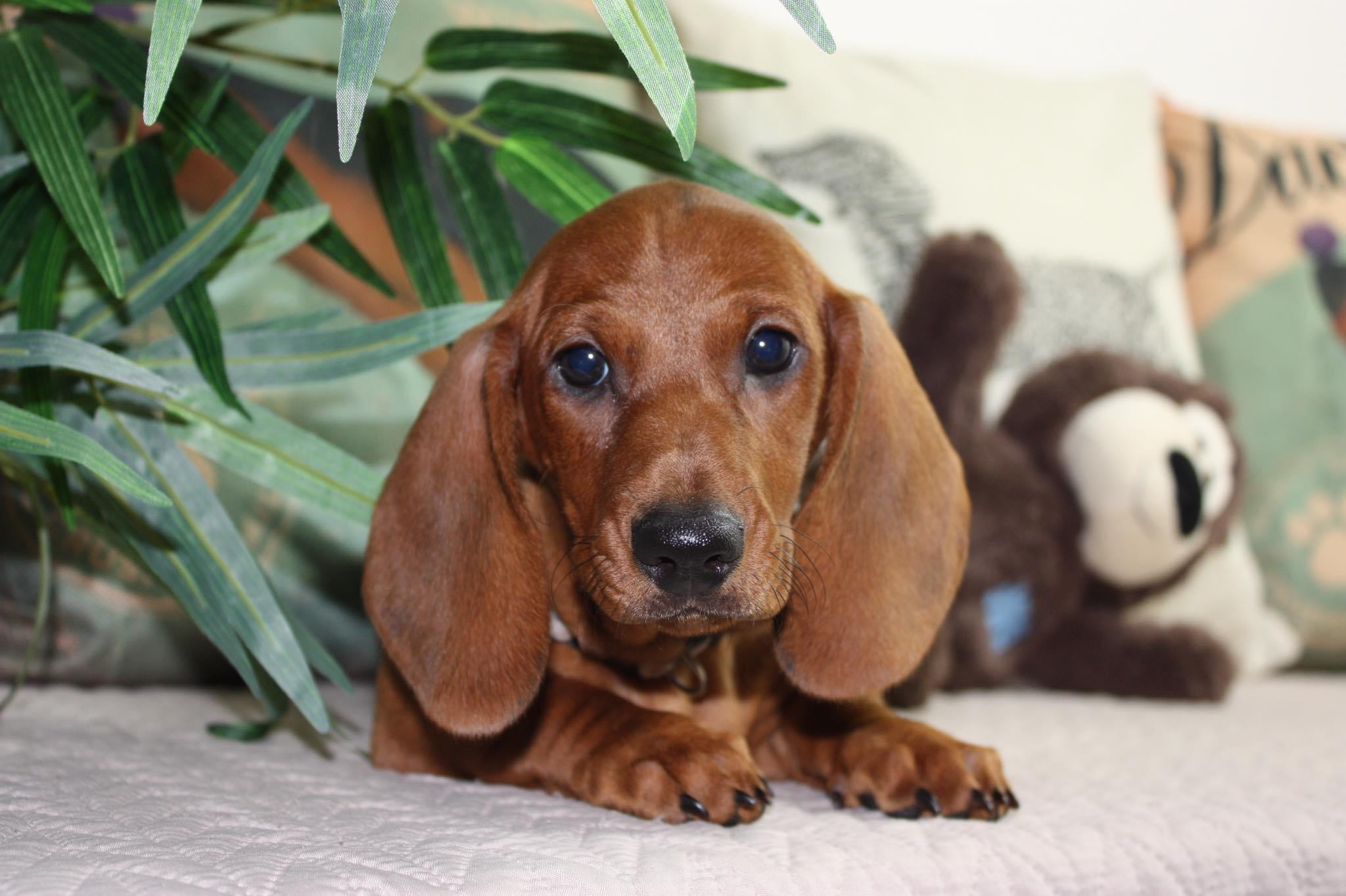 Puppy from previous litter