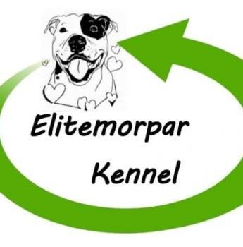 Pedigree American Staffordshire terriers