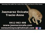 For Sale Ocicat Kittens for Sale