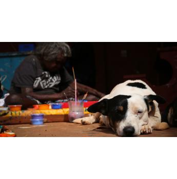 Desert Dogs Australia - Warlu Dog Program