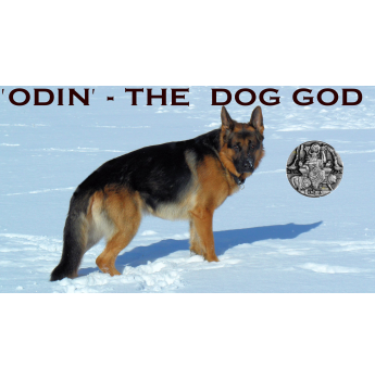 Leishjaclyn God Dancer - German Shepherd Stud Dog