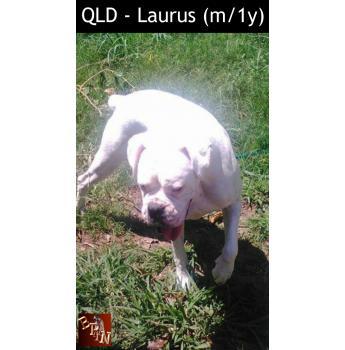 QLD - Laurus (m/1y)