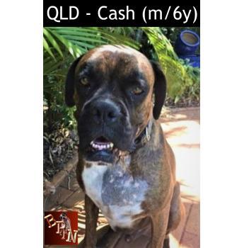 QLD - Cash (m/6y)