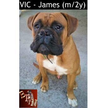 VIC - James (m/2y)