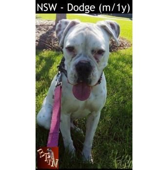 NSW - Dodge (m/1y)
