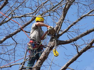 How to Become an Arborist: Tips, Equipment and Qualifications