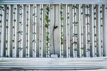 hydroponics vertical farm