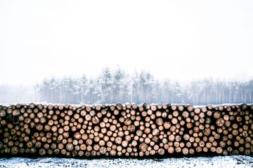 wood in forest
