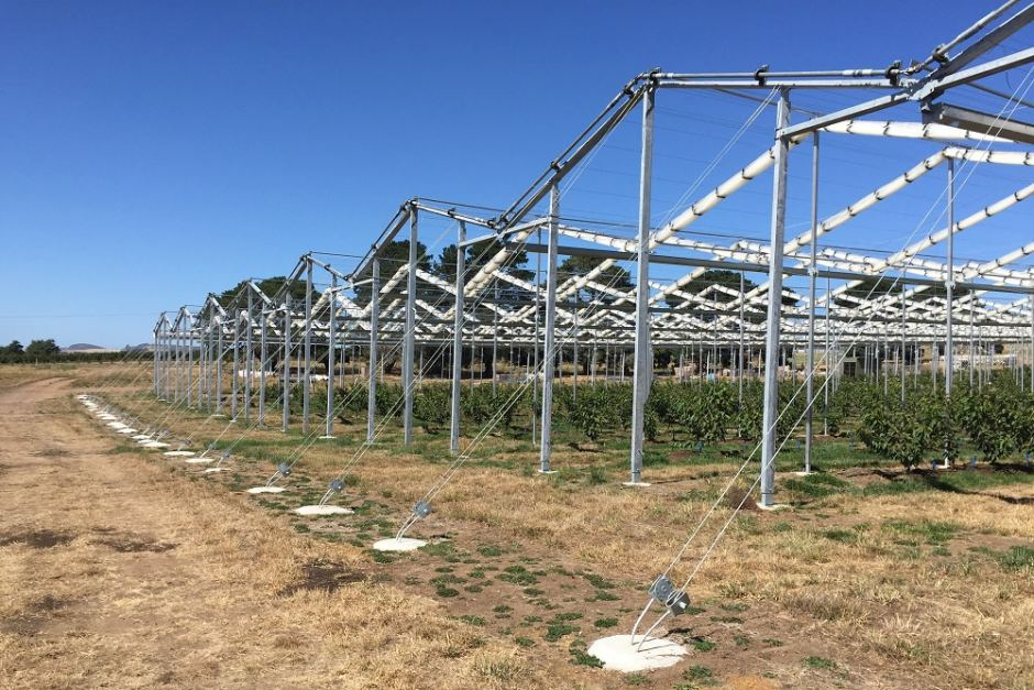40,000m2 Retractable Roof Secures Cherry Farm's Future