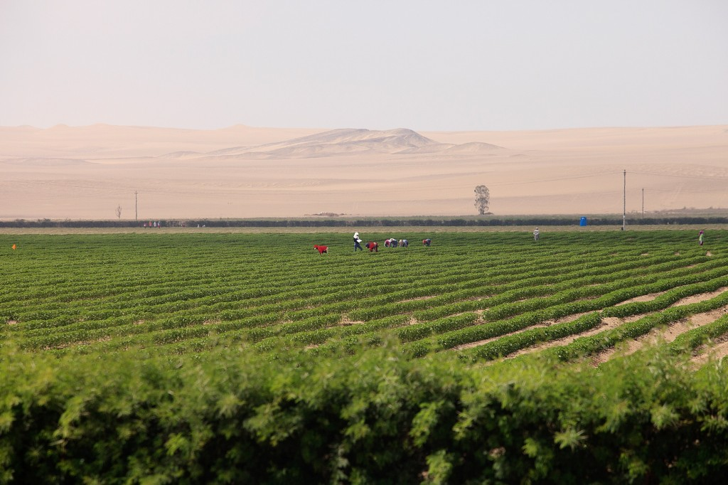 Turning Desert into Farmland: The How and Why