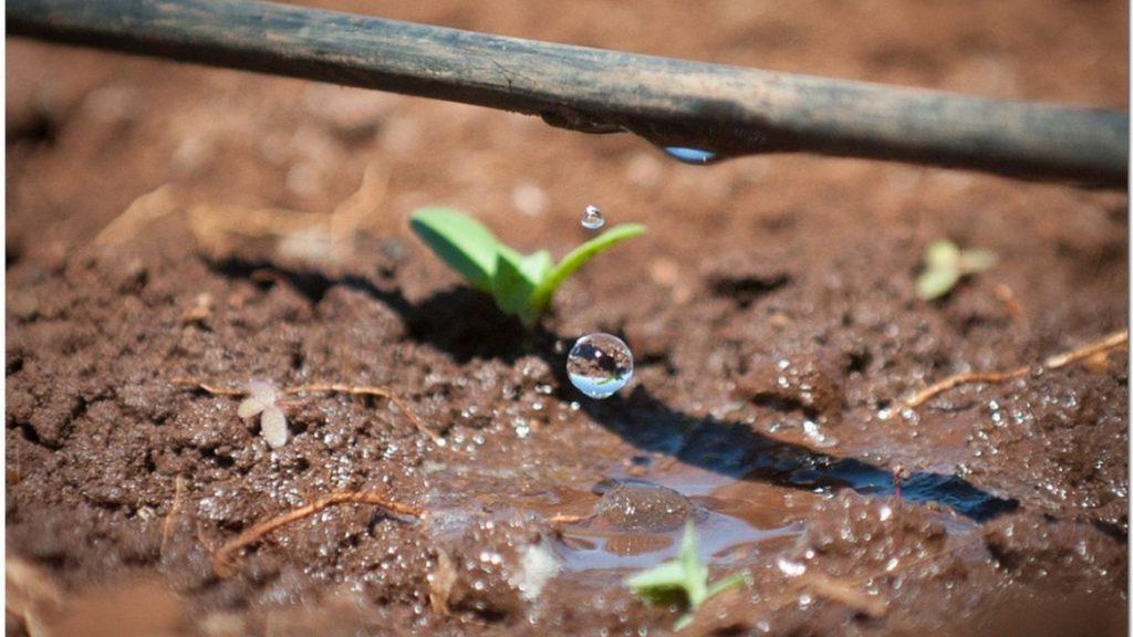 drip irrigation farming in the desert